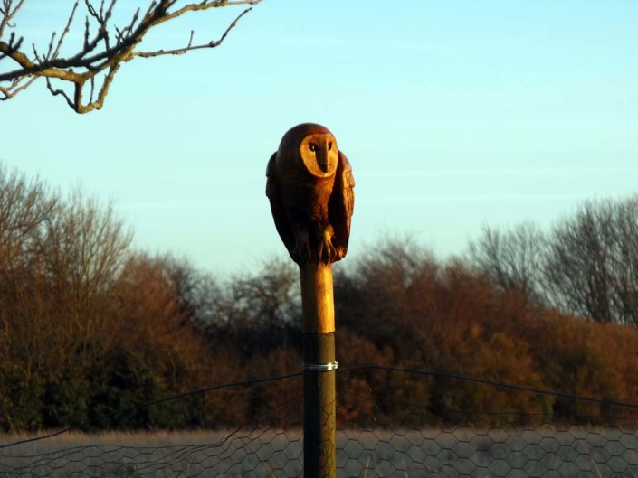 Chainsaw Carving Gallery | Sculpture of owl perched on a post at dusk in Norfolk setting